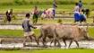 ಪ್ರಧಾನಮಂತ್ರಿ- ಕಿಸಾನ್ ಯೋಜನೆ: ವರ್ಷದಲ್ಲಿ  50,850 ಕೋಟಿ ಬಿಡುಗಡೆ