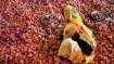 ಈರುಳ್ಳಿ ಬೆಳೆದಿದ್ದ ಚಿತ್ರದುರ್ಗದ ರೈತ ಮಲ್ಲಿಕಾರ್ಜುನ ಈಗ ಕೋಟ್ಯಧಿಪತಿ