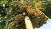 ಕರ್ನಾಟಕ ಪ್ರಮುಖ ಮಾರುಕಟ್ಟೆಯಲ್ಲಿ ಅಡಿಕೆ, ಕಾಫೀ ಆಗಸ್ಟ್ 11ರ ದರ