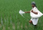 Fertiliser Sales Jump 83 To 11161 Lakh Tonnes In April June