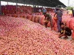 Telangana Govt To Sell Onions At Rs 35 Per Kilo In Hyderabad