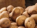 Monthly Average Price Of Potato Highest Since 2010 January