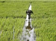 ಸ್ಟ್ರಾಬೆರಿ ಹಸುವಿಗೆ ಮೇವು, ದ್ರಾಕ್ಷಿ ಕಾಡು ಪಾಲು, ಹೂವು ಕೇಳೋರ್ಯಾರು