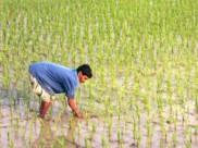 ಬಜೆಟ್: ಕೃಷಿ ಕ್ಷೇತ್ರಕ್ಕೆ ಕುಮಾರಸ್ವಾಮಿ ನೀಡಿರುವ ಕೊಡುಗೆಗಳು