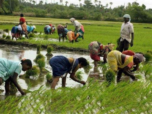 ಮಾರಾಟ ಆಗದ ಬೆಳೆ, ಕುಸಿಯುತ್ತಿರುವ ಆದಾಯ: ಭಾರತದ ಗ್ರಾಮೀಣ ಆರ್ಥಿಕತೆ ಸಂಕಷ್ಟದಲ್ಲಿ
