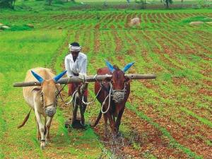 Pm Kisan Scheme 4000 Cash Farmers Account Before Lok Sabha