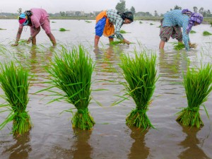 Karnataka Government Farmers Schemes Here Is Complete List