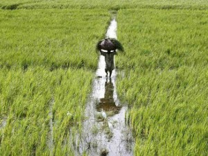 Government Increased Msp To 14 Crops Extended Loan Repayment Period