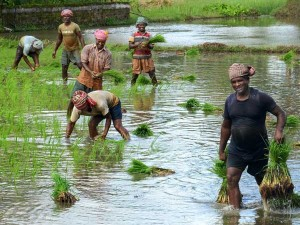 Karnataka Budget 2019 Hd Kumaraswamy Announcements Agriculture Cooperative Sector