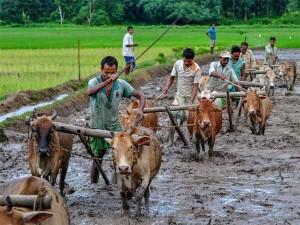 Govt Seeks Views Of States On Crop Insurance Scheme