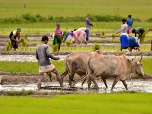 February 1 Central Budget Central Focus To Improve Farmers Income