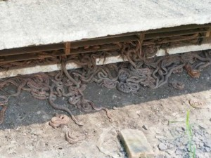 China S This Village Residents Earning Thousands Of Dollars Through Snake Breeding