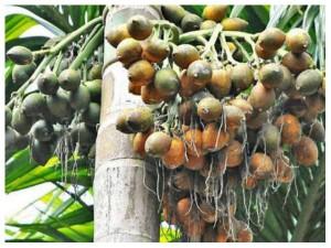 July 29th Th Price List Of Arecanut Coffee Pepper Rubber Cardamom Turmeric Etc