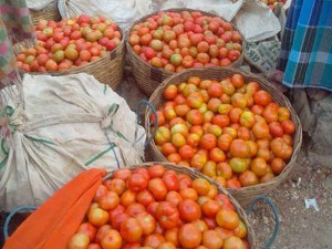Tomato Retail Price Per Kg Touched 70 Rupees In Delhi
