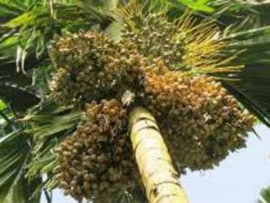 Arecanut Coffee Pepper Rubber Price On 6 August