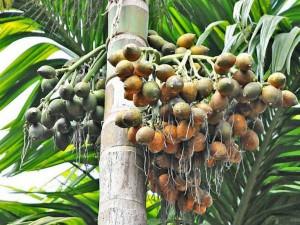 Arecanut Coffee Pepper Rubber Price In Karnataka Today 23 October